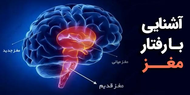 مغز از سه بخش جدید، میانی و قدیم تشکیل شده است