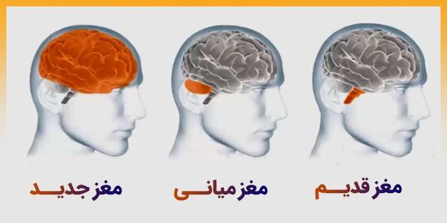 مهمترین فعالیت های مغز